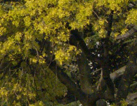 Olympus E-300 camera image noise