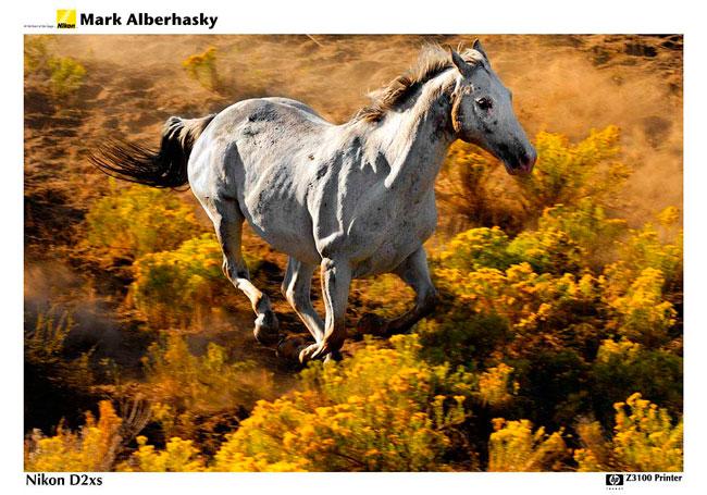 Mark Alberhasky photography