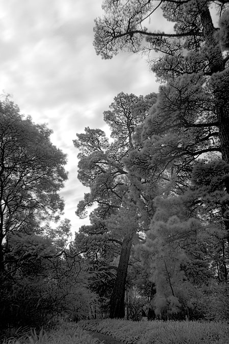Canon 30D Infrared Photography