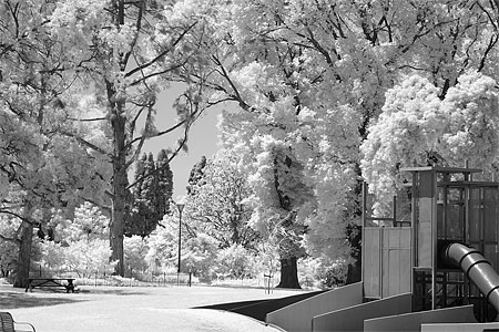 Infrared photography with a converted 350D