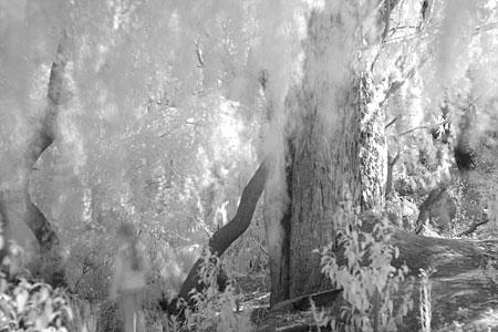 Canon 400D/Rebel XTi digital camera infrared