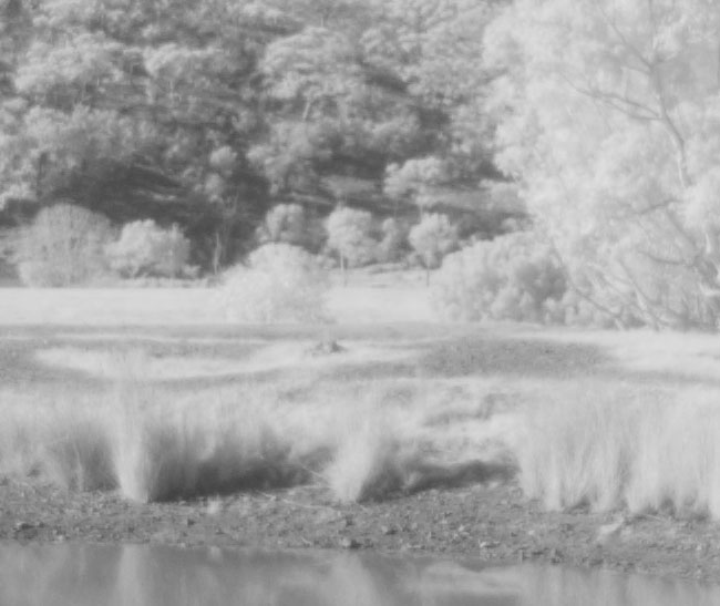 Canon 1Ds Mark III infrared camera test