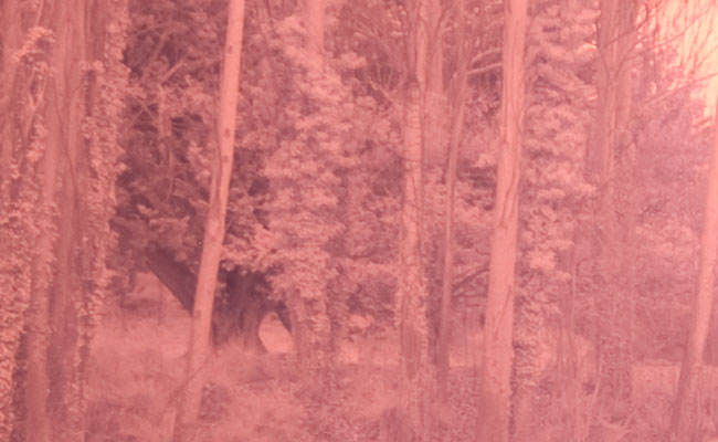 Infrared photography with the Olympus E-510 digital camera