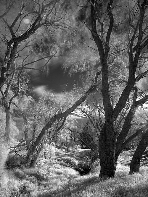 Infra red photography with the Olympus E-510 digital camera