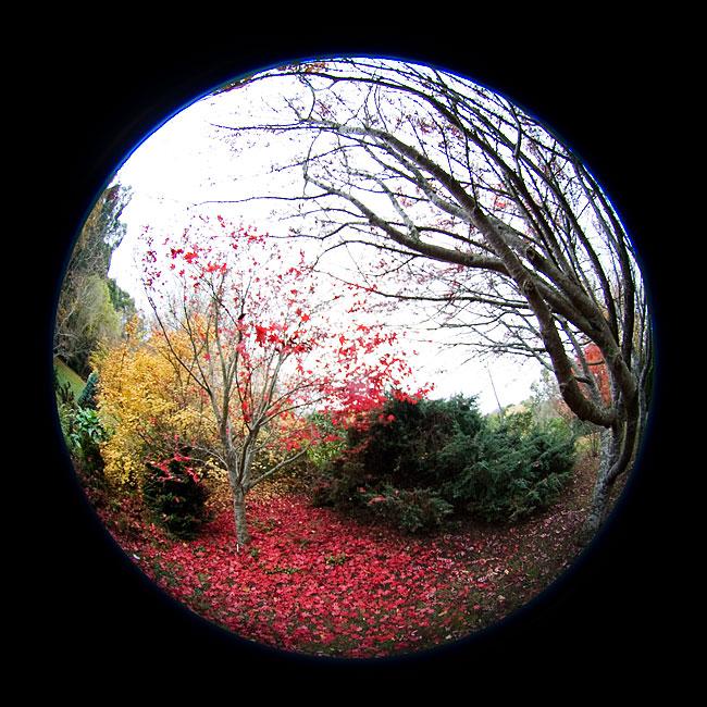 Sigma 4.5mm circular fisheye lens review