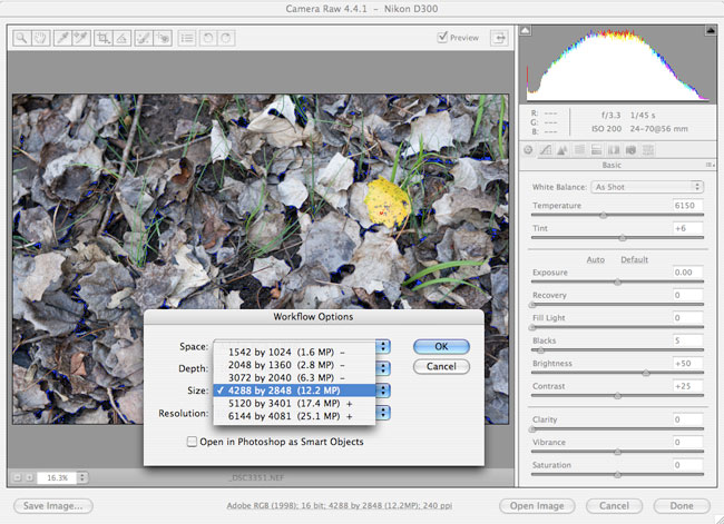 Adobe camera RAW resizing an image