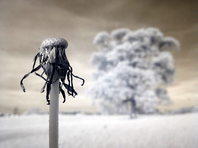 Infrared photography by Zach Stern