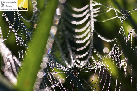 Mark Alberhasky photo of a spider's web