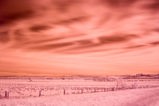 Canon 450D/Rebel XSi Digital Camera Infrared Photography Tests
