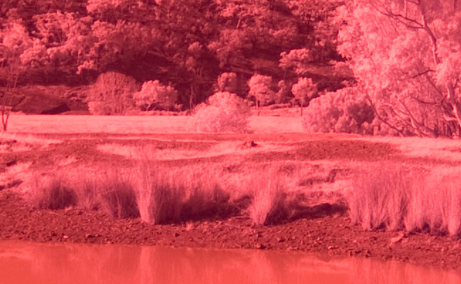 Canon 450D/Rebel XSi Digital Camera Infrared Photography