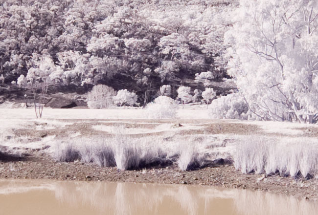 Converted Canon 350D Infrared Photography Camera Test