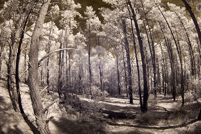 Infrared fisheye images