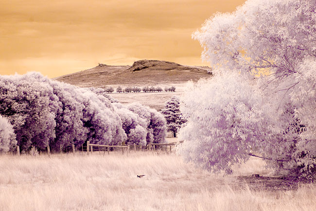 Infrared photography by Wayne J. Cosshall