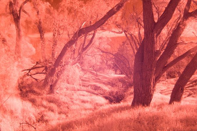 Nikon D300 digital camera infrared tests