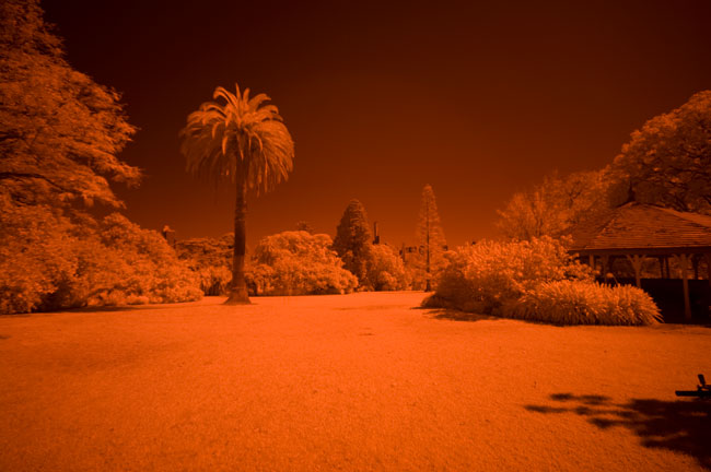 Pentax K20D digital camera infrared photography