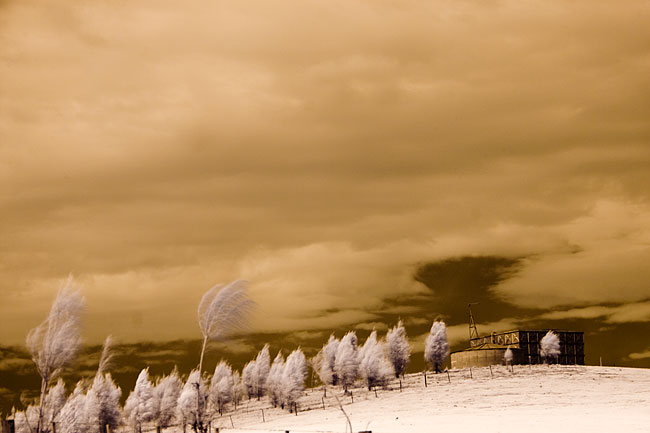 digital infrared photography by Wayne J. Cosshall